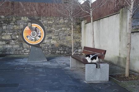キルケニーのネコ0119