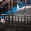 Photos: 鳴沢氷穴_8月の氷柱-5295