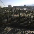 Photos: 久しぶりに来たら、駅ビルに屋上庭園できてたよ(*^^*)