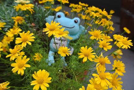 この黄色い花の名前は?